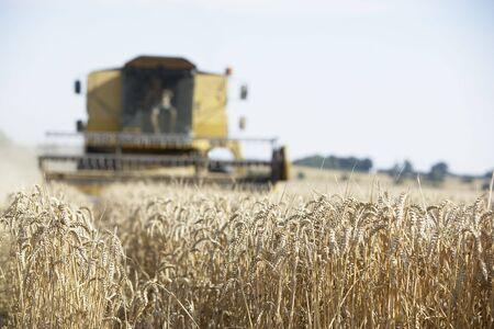 Combine Harvester Working In Field Stock Photo - 5040678