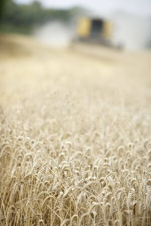 Combine Harvester Working In Field Stock Photo - 5040633