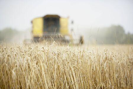 combine harvester: Cosechadora trabajan en el campo Foto de archivo