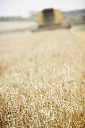Combine Harvester Working In Field Stock Photo - 5040816