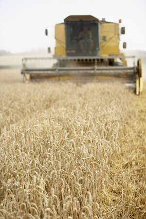 Combine Harvester Working In Field Stock Photo - 5040572