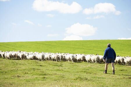 Farm Worker With Flock Of Sheep Stock Photo - 5040876
