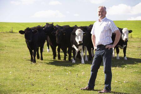 herding: Farm Worker With Herd Of Cows