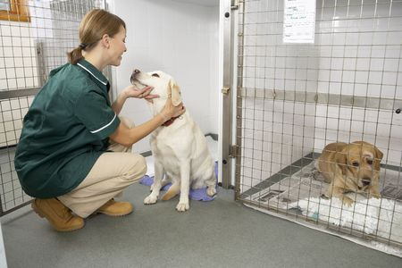 cages: Vetinary Nurse Checking Sick Animals In Pens