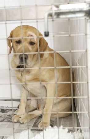 tierschutz: Hund Wiederherstellen in der beruflichen Bildung der Zwinger