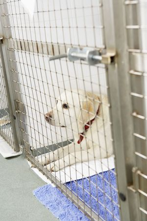 recovering: Dog Recovering In Vets Kennels
