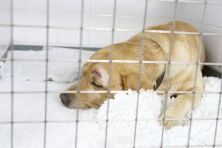 vetinary: Dog Recovering In Vets Kennels