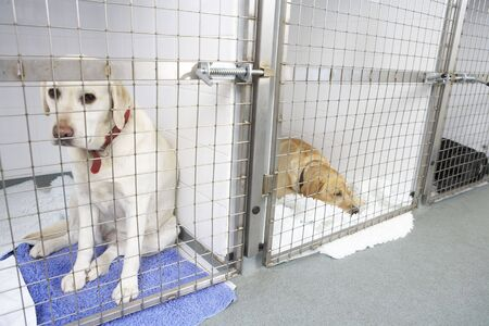 Dog Recovering In Vets Kennels photo