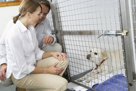Couple Visiting Pet Dog Stock Photo - 5043425