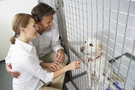 vetinary: Couple Visiting Pet Dog