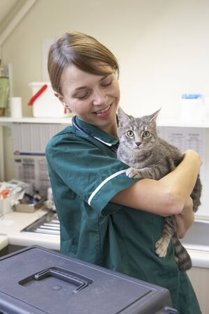 tierschutz: Vet Cat Holding in der Chirurgie