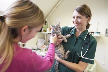 vetinary: Young Girl Bringing Cat For Examination By Vet
