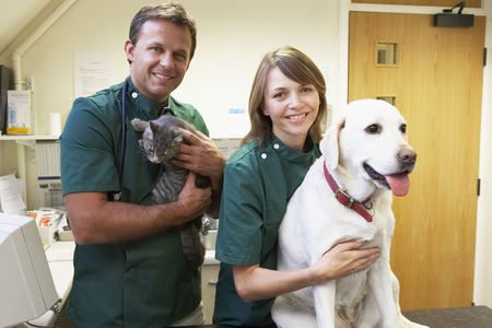vetinary: Vetinary Staff With Dog And Cat In Surgery