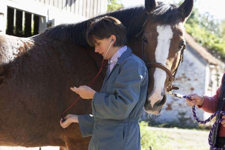 mujer en caballo: Con examen veterinario de caballos Stethescope Foto de archivo
