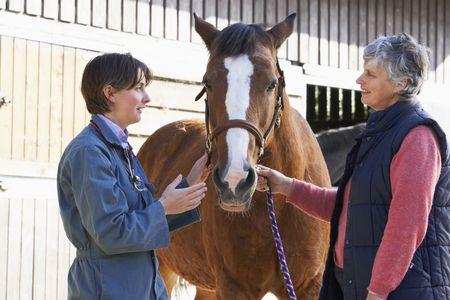 veterinario: Veterinario de caballos en la discusi�n con Propietario