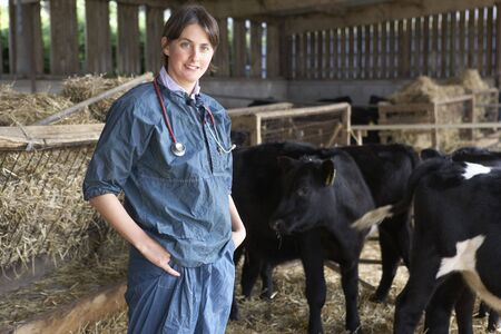 vetinary: Portrait Of Vet In Barn With Cattle