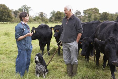 vetinary: Farmer In Discussion With Vet In Field