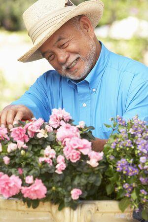 asian gardening: Senior Man Gardening Stock Photo