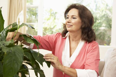 houseplant: Senior Woman At Home Looking After Houseplant