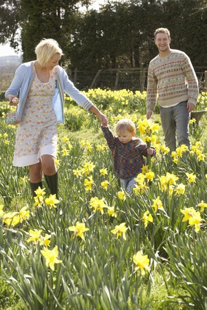 amongst: Young Family Walking Amongst Spring Daffodils