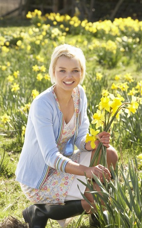 garden flowers: Young Woman Picking Spring Daffodils Stock Photo