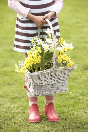 nine year old: Detail Of Girl Holding Basket Of Daffodils In Garden