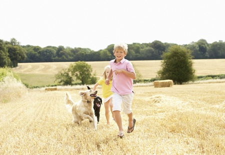 Boy With Dogs Running Through Summer Harvested Field