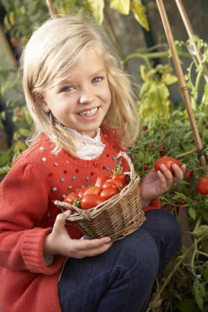 Young child harvesting tomatoes photo
