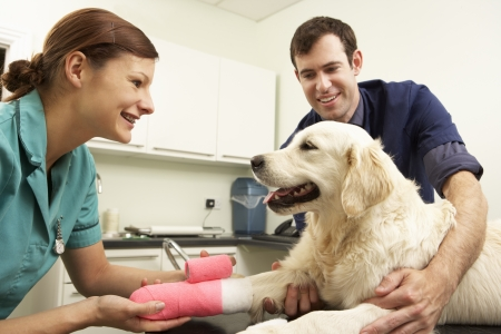 treating: Male Veterinary Surgeon Treating Dog In Surgery
