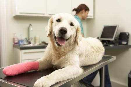 veterinarians: Female Veterinary Surgeon Treating Dog In Surgery Stock Photo