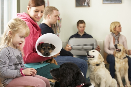 Busy Waiting Room In Veterinary Surgery Stock Photo