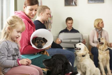 veterinario: Sala de espera ocupada en Cirugía Veterinaria