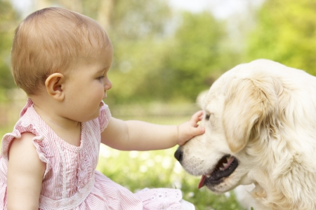 babies laughing: Baby Girl In Summer Dress Sitting In Field Petting Family Dog