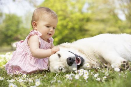 bebe sentado: Baby Girl en el vestido de verano que se sienta en Family Dog Petting Campo Foto de archivo