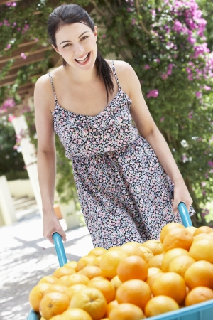 barrow: Woman Pushing Wheelbarrow Filled With Oranges Stock Photo