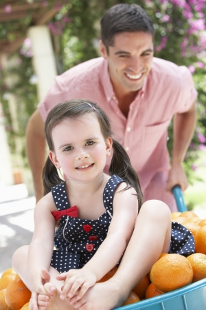 two year old: Father Pushing Daughter In Wheelbarrow Filled With Oranges