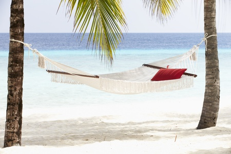Empty Hammock Between Palm Trees photo