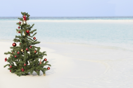 tropical christmas: Christmas Tree On Beautiful Tropical Beach