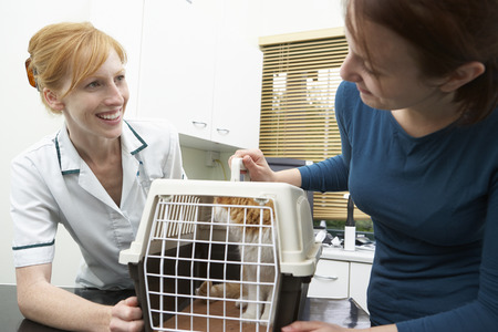 cat carrier: Owner Taking Cat To Vets In Carrier Stock Photo