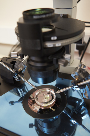 fertility: Laboratory Fertilization Of Eggs In IVF Treatment