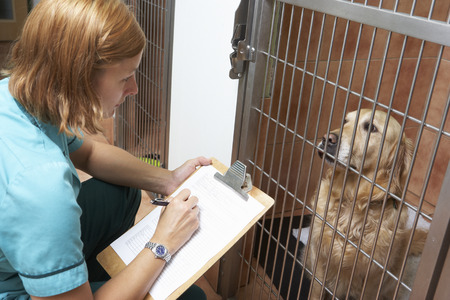 Veterinary Nurse Checking On Dog In Cage