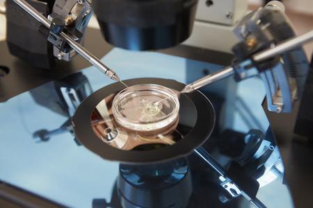 traitement: Laboratoire fécondation des ?ufs dans la FIV Banque d'images