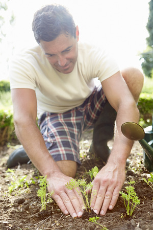 sufficiency: Man Planting Seedling In Ground On Allotment Stock Photo