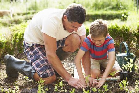 父と息子の割当ての地面に苗を植える