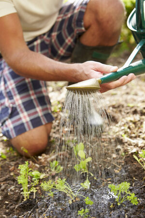 sufficiency: Close Up Of Man Watering Seedlings In Ground On Allotment