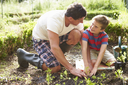 sufficiency: Father And Son Planting Seedling In Ground On Allotment