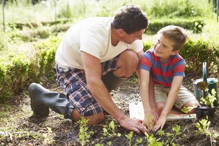 regar las plantas: Padre e hijo Plantación de plántulas en tierra en la asignación