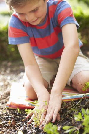 sufficiency: Boy Planting Seedlings In Ground On Allotment