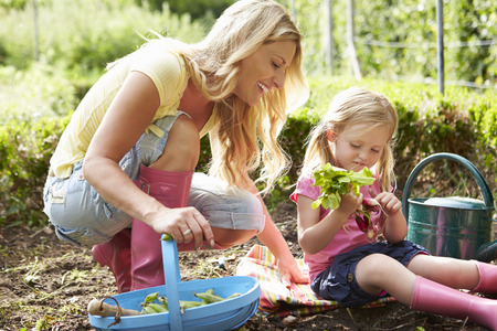 Mother And Daughter Harvesting Radish On Allotment Archivio Fotografico