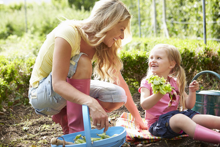 vegetable plants: Mother And Daughter Harvesting Radish On Allotment Stock Photo